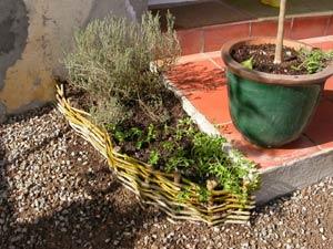 Une bordure végétale en osier