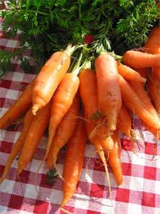 Botte de carottes - D.R.