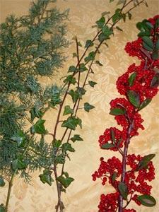 Branches cypr s tout - Comment se debarrasser du lierre ...