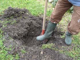 creuser un trou pour planter un arbuste