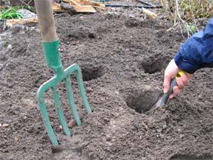 Creusement des trous de plantation des vivaces