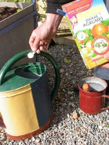 arrosage engrais spécial agrumes