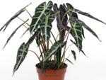 Les plantes d'appartement - fiches pratiques