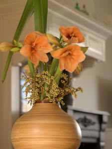 Hippeastrum Apricot Beauty