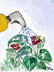 Anthurium : comment le faire refleurir