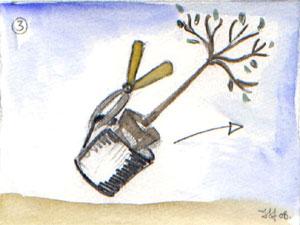 Extraction de l'arbuste de son conteneur