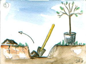 comment planter un olivier video top terrasses et balcons cultiver des fruitiers sur son balcon. Black Bedroom Furniture Sets. Home Design Ideas