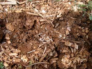 Champignons, vers... les chaines trophiques structurent le sol