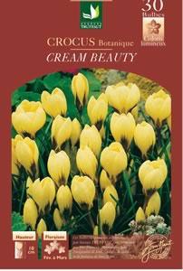 Crocus botanique 'Cream beauty' - D.R. Truffaut