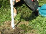 L'herbe tondue est utile au verger