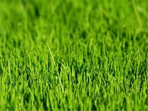 Pelouse : préparation du sol avant semis