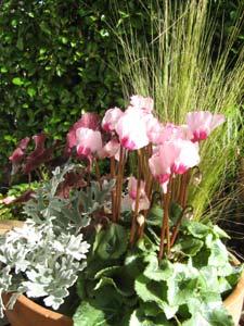 Jardiniere automne - idée 1