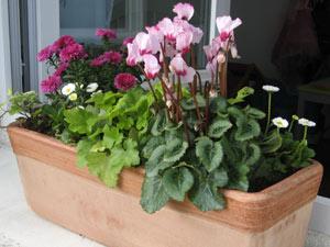 Fleurs jardiniere automne for Balconniere hiver