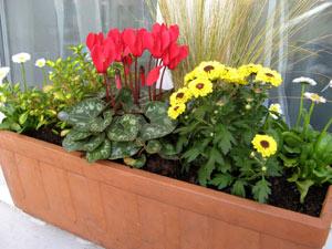 savoir composer une jardini re d 39 automne part 2. Black Bedroom Furniture Sets. Home Design Ideas
