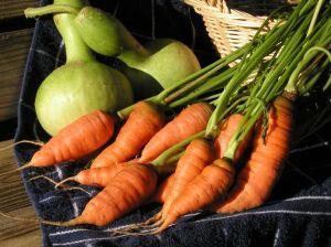 Légumes AMAP
