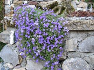 Plante dans un muret
