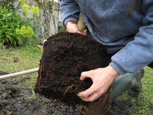 Jardinage en avril: rosiers, arbres, arbustes et pelouse
