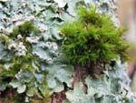 Mousse et lichen : une menace pour vos arbres ?