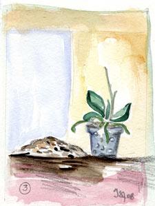 le rempotage des orchid es l 39 atelier. Black Bedroom Furniture Sets. Home Design Ideas