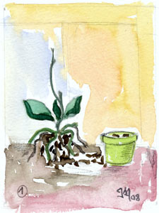 Rempoter une orchid e la maison du p re no l - Quand rempoter une orchidee ...