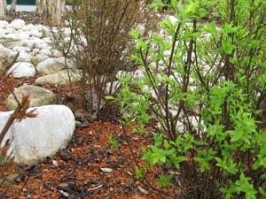 Jardinage en septembre: rosiers, arbres, arbustes et pelouse