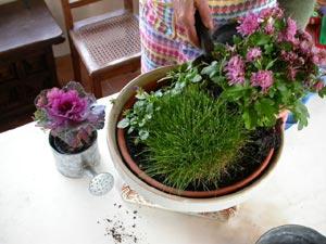 Potée avec chrysanthème fané