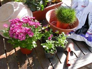 Les plantes, outils et fournitures nécessaires