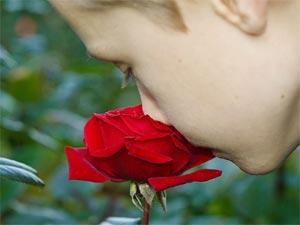 Parfum de la rose... - D.R