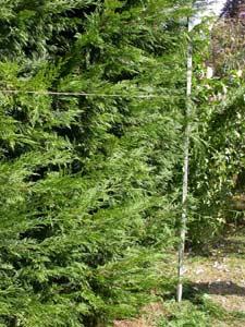 Piquet d'angle et cordeau de jardin
