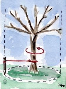 Encore du boulot au jour le jour - Tailler un arbre fruitier ...