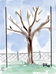ramure de l'arbre