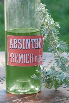 Aromatiques oubliées : mélisse, absinthe et compagnie