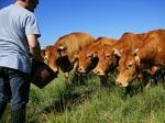 Le woofing, une solution économique pour voyager bio