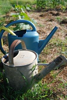 arrosoirs et sécheresse