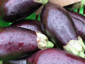 Une nouvelle aubergine OGM commercialisée en Inde ?