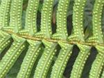 Une banque à graines britannique pour sauver les espèces végétales menacées