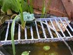 Un jardin d'eau miniature