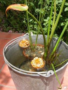 Actualit mondiale - Plantes aquatiques pour petit bassin ...
