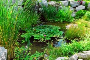 Jardin d\'eau : bassin et fontaine
