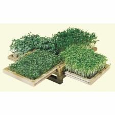 Pour Noël, offrez un jardin miniature : la Boîte Verte