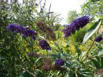 Plantes exotiques envahissantes : un risque pour la biodiversité