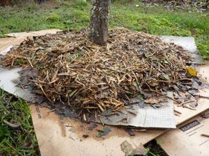 carton ondul et paillage au pied des arbres. Black Bedroom Furniture Sets. Home Design Ideas