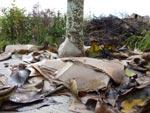 Du carton au pied des arbres