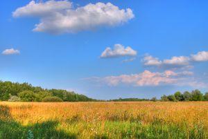 Pétition pour les Préparations Naturelles Peu Préoccupantes