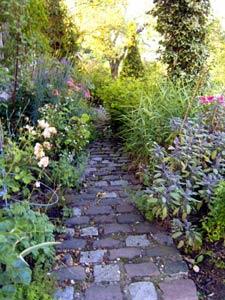 La mousse ou le béton : plantes couvre-sol