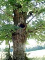 Les arbres savent s'adapter au changement climatique