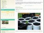 Chlorophylle : jardin naturel