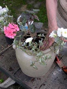 Installation des plantes