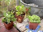 Une composition de plantes grasses