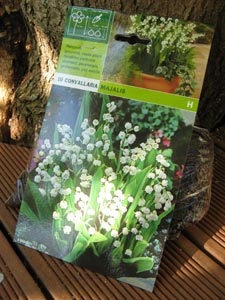 comment planter le muguet